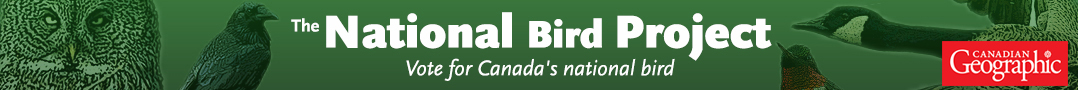 National Bird Project - Vote for Canada's National Bird