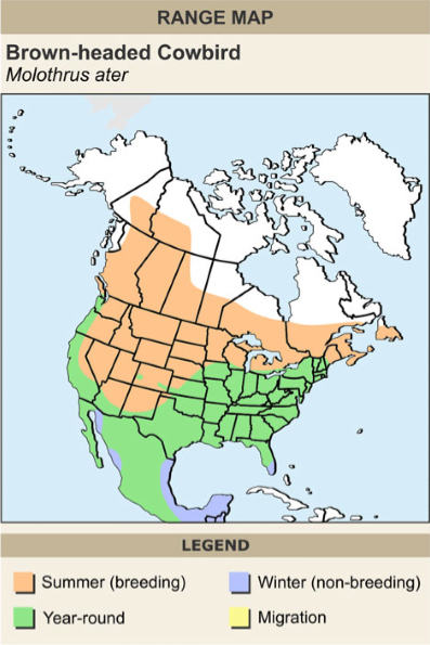 Brown-headed cowbird range map