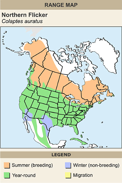 Northern flicker range map