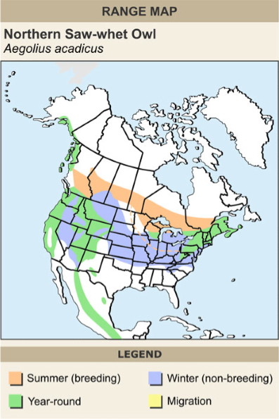 Northern saw-whet owl range map