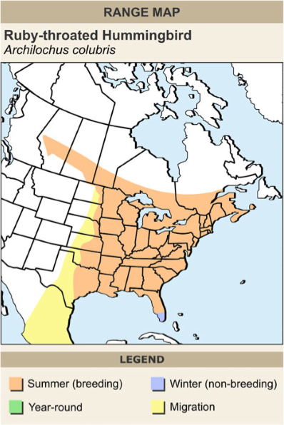 Ruby-throated hummingbird range map